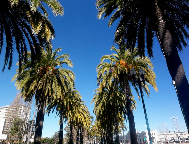 two rows of palm trees in San Francisco