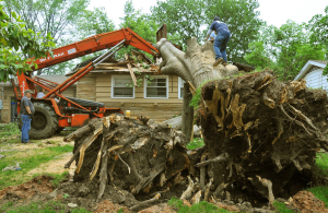 tree removal services near a residential neighborhood