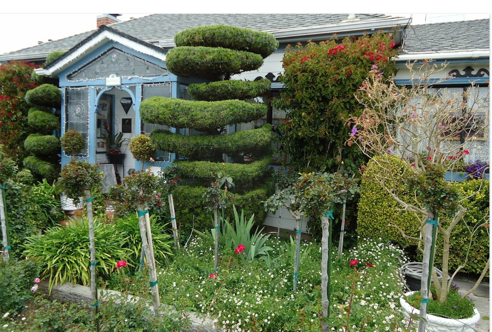 garden packed with plants in san francisco