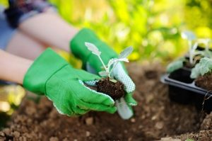 planting services in the bay area