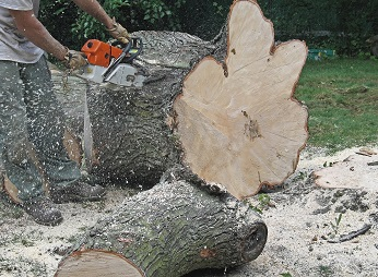 tree stump removal in san mateo